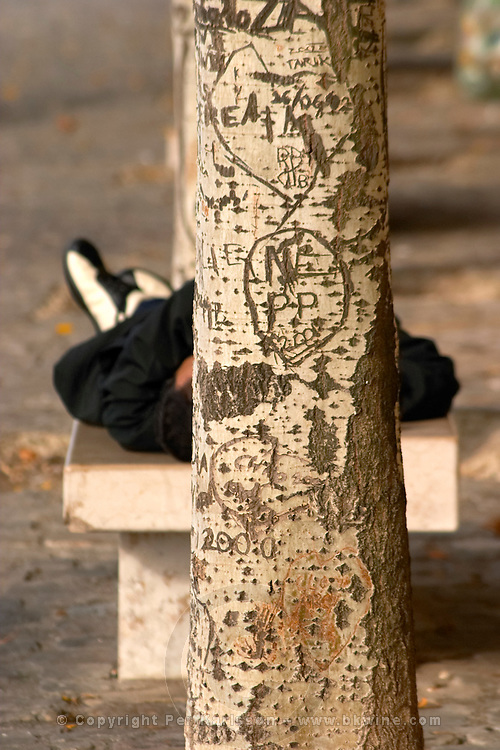 Tree with carvings and a man lying on a bench in the sun along the Seine river in Paris on a Sunday morning