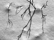 Branches and shadows in snow in teh Seine River Forest<br />