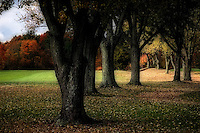 A country club fairway is flanked by a moody air of darkness on a late autumn afternoon.
