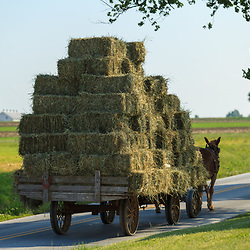 Ronks, PA - June 1, 2013: An Amish farmer uses a team of draft horses to pull a hay wagon with metal wheels on a road.
