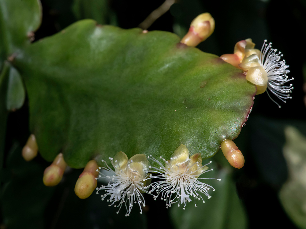 A Bloomin' Epiphyte