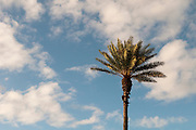 A single palm tree stands against a blue sky with clouds.