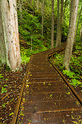 Trail of the Cedars, Glacier National Park, Montana USA