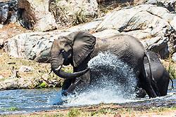 Shower time in Kruger National Park, South Africa