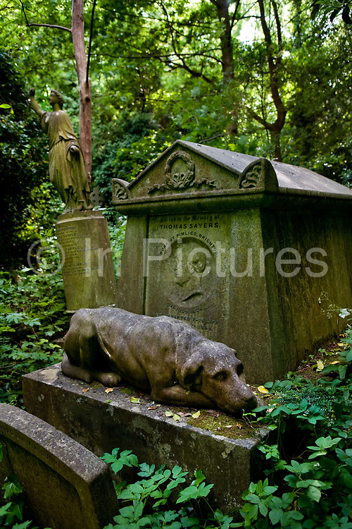 Monument to the famous Victorian bare-knuckle boxer, Thomas Sayers with a life sized statue of his much-loved dog Lion, keeping guard over his masters grave in Highgate Cemetery, , 25th May, 2005, Highgate Cemetery, London, United Kingdom. The funeral of Thomas Sayers, the last of the bare-knuckle prizefighters, was sure to attract crowds. He had been hugely popular in his lifetime, having vanquished many a more formidable-looking opponent in a career lasting over ten years.  The dog, with a band of crape around his neck, behaved impeccably. Not so the other spectators at the cemetery, who danced and screamed, yelled and hooted, whistled and shrieked, like demons.... As many as 10,000 turned up for the burial, rushing ahead to the top of the hill where it was to take place, swarming into the trees for the view.