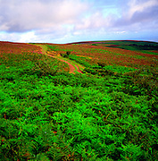 Landscape on the top of the Quantock Hills Somerset England