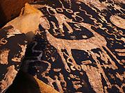 Ornate petroglyph panel, Painted Desert backcountry, Petrified Forest National Park, Arizona.  BS