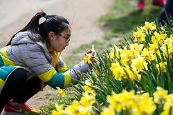 © Licensed to London News Pictures. 03/04/2016. London, UK. Children enjoying sunshine and warm weather in Green Park, London on Sunday, 3 April 2016. Photo credit: Tolga Akmen/LNP