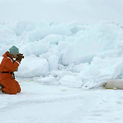 Harp Seal, (Pagophilus groenlandicus) Tourist dressed in survival suit photographing pup harp seal on ice. Nova Scotia. Canada.