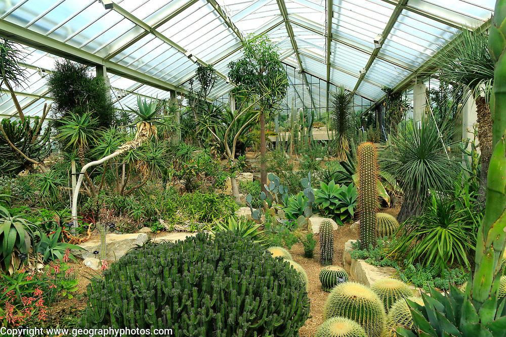 Desert plants inside the Princess of Wales conservatory Royal Botanic Gardens, Kew, London, England, UK