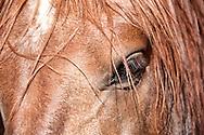 Horse head closeup.