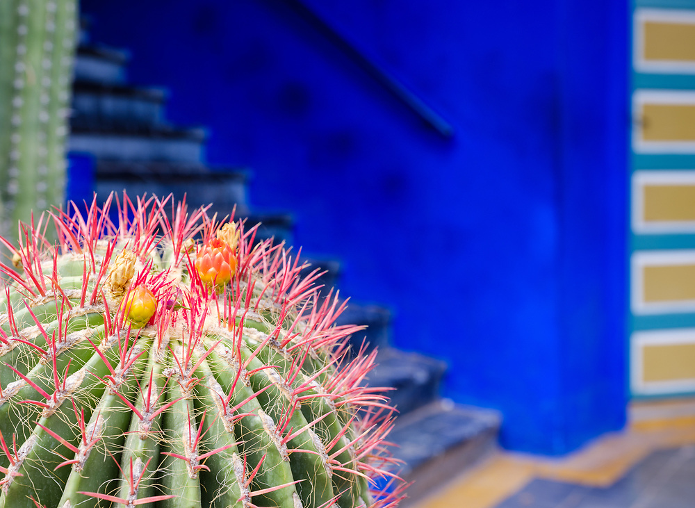 MARRAKESH, MOROCCO - CIRCA APRIL 2017: Cactus with colorful blue background and doors at the Jardin Majorelle in Marrakech