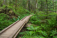 Heart of the Forest Trail Boardwalk Olympic National Park.