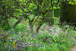 Borders filled with aquilegias in the Pillar Garden at Hidcote Manor