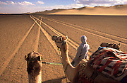 Egypt, 2000 - A bedouin guide leads three camels down crisscrossing tire tracks and into the horizon. The tracks seem to stretch into the distance forever on a trek not be covered easily by the camels versus the cars that came before.