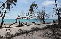A man walks his livestock on the storm battered beach in Port Salut, Haiti, on October 11, 2016. Photo by Patrick Farrell/Miami Herald/TNS/ABACAPRESS.COM