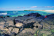 Marine iguana on the rocks, Galapagos Islands, Ecuador