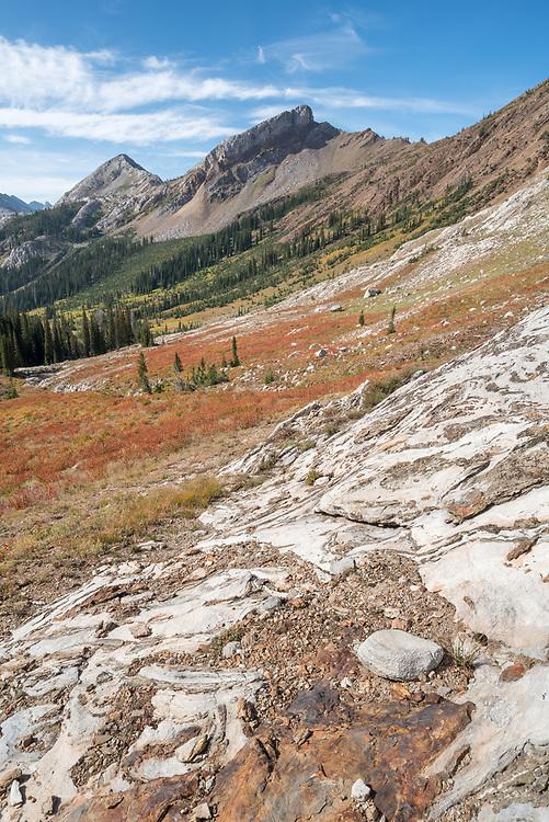 Meadow of Alpine fleeceflower turning color in Oregon's Wallowa Mountains.