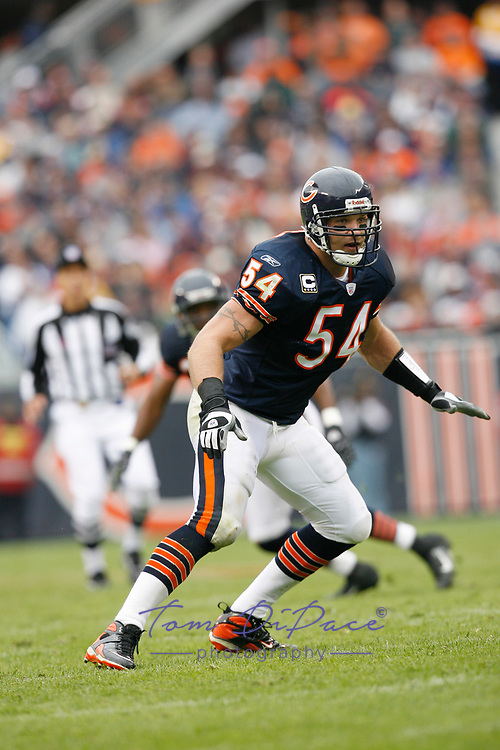 Chicago Bears Brian Urlacher in a game against the Minnesota Viking at Solider Field in Chicago.<br /> ( Photo/Tom DiPace)
