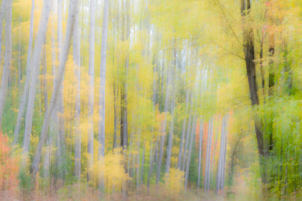 Autumn forest impressionism, October, Crawford County, Michigan, USA