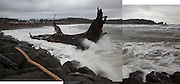 Waves crash against a giant tree, come ashore as driftwood, on First Beach near La Push, Olympic Peninsula, Washington.