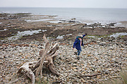 A beachcomber trips on a rock while exploring the northern shore of Holy Island, on 27th September 2017, on Lindisfarne Island, Northumberland, England. The Holy Island of Lindisfarne, also known simply as Holy Island, is an island off the northeast coast of England. Holy Island has a recorded history from the 6th century AD; it was an important centre of Celtic and Anglo-saxon Christianity. After the Viking invasions and the Norman conquest of England, a priory was reestablished.