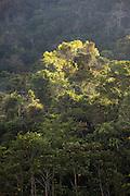 Forest canopy of Manu National Park, Peru, South America