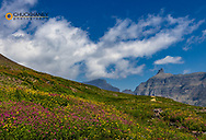 Alpine meadow filled with wildflowers with Bishops Cap in background in Glacier National Park, Montana, USA
