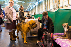 © Licensed to London News Pictures. 09/03/2017. Dog owners with their dogs on the first day of Crufts, the world's largest dog show. The annual event is organised and hosted by the Kennel Club and has been running since 1891. Birmingham, UK. Photo credit: Ray Tang/LNP