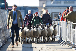 © Licensed to London News Pictures. 30/09/2018. LONDON, UK.  The annual Sheep Drive by the Worshipful Company of Woolmen takes place across London Bridge.  The event raises funds for the Lord Mayor's Appeal and the Woolmen's Charitable Trust.  Photo credit: Stephen Chung/LNP