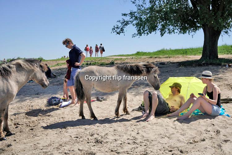 Nederland, Nijmegen, 6-5-2018 Warme zomerse dag op het Waalstrand van Nijmegen in de Ooijpolder, makkelijk te bereiken via de voetgangersbrug Ooijblik die hier ligt. Twee konikpaarden worden aangetrokken door het eten van de badgasten. Het zwemmen in de rivier de waal, rijn, is gevaarlijk vanwege de veraderlijke stroming en de drukke scheepvaart. Veel mensen maken een wandeling door de ooijpolder . Wilde paarden, koniks, lopen langs het water . De paarden zijn nieuwsgierig naar het eten en voedsel wat de mensen bij zich hebben . Deze twee zijn verstoten door de kudde en mengen zich met de badgasten. Er is een kleine nevengeul gegraven met een voetgangersbruggetje eroverheen zodat het gebied nog meer natuurwaarde heeft gekregen . Foto: ANP/ Hollandse Hoogte/ Flip Franssen