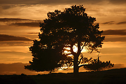 July 21, 2019 - Tree At Sunset, North Yorkshire, England (Credit Image: © John Short/Design Pics via ZUMA Wire)