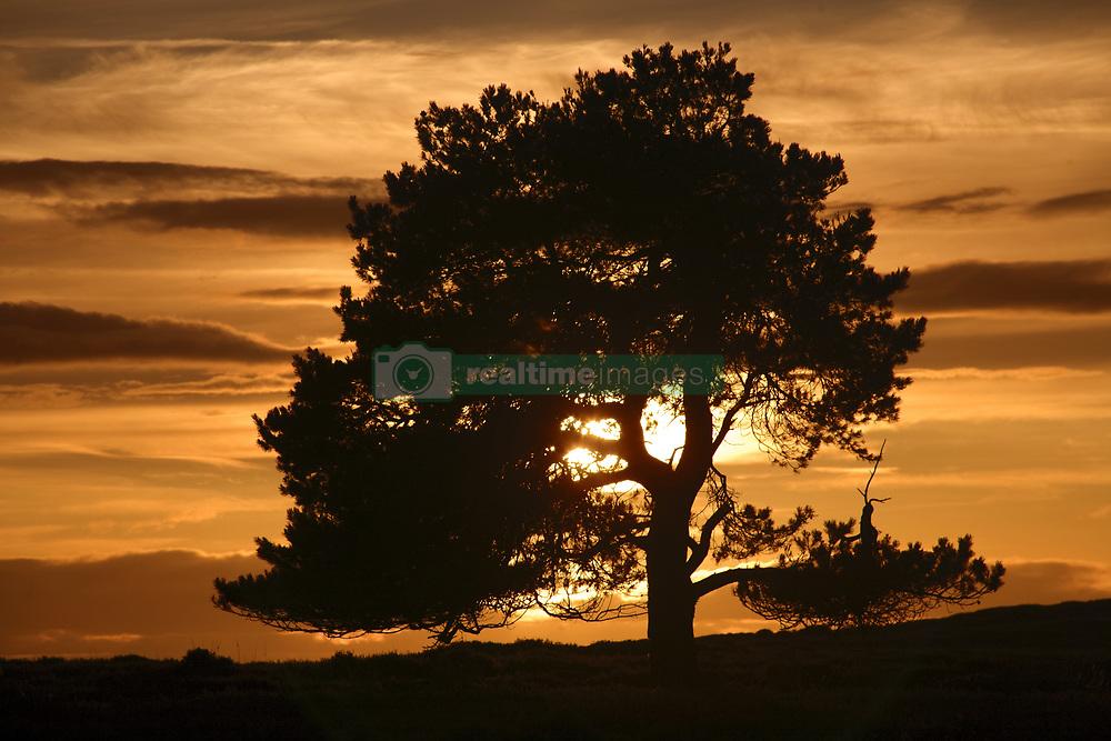 July 21, 2019 - Tree At Sunset, North Yorkshire, England (Credit Image: © John Short/Design Pics via ZUMA Wire)