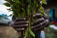 Men and women in Maua prepare Khat to be raced to Nairobi for packing. They peel off the leaves which lose potency quickly, and pack the stems in bannana leaves before loading them up on souped up pick-up trucks.  Maua is the Khat production center of Kenya.