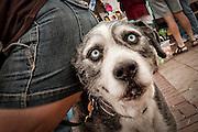 PetFest at Caras Park in Missoula, Montana. Missoula Photographer
