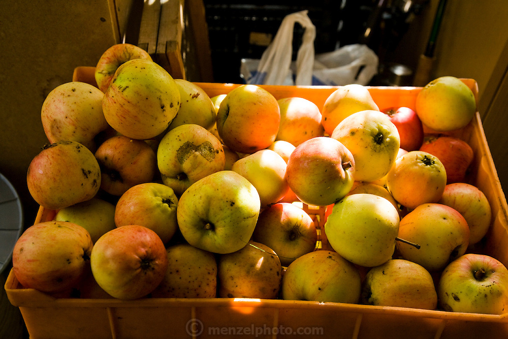 Apples displayed at the Central Market in Riga, Latvia.  Riga's Central Market, established in 1201, is one of Europe's largest and most ancient markets.