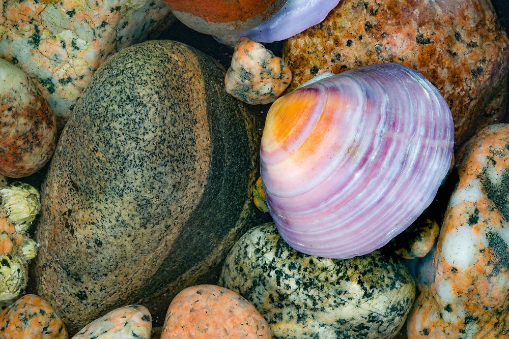 Clamshell and beach rocks design, August, Savary Island, Salish Sea, Sunshine Coast, British Columbia, Canada