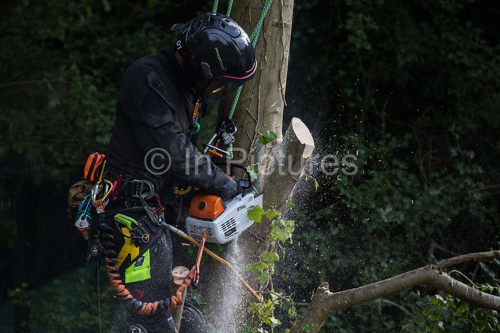 A tree surgeon removes limbs from a tree alongside the river Colne as part of works in conjunction with the HS2 high-speed rail link in Denham Country Park on 7 September 2020 in Denham, United Kingdom. Anti-HS2 activists continue to try to prevent or delay works on the controversial £106bn project for which the construction phase was announced on 4th September from a series of protection camps based along the route of the line between London and Birmingham.