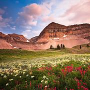 Wildflowers and Mt. Timpanogos