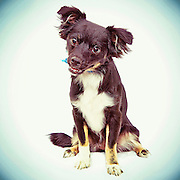Terrier dog looking for home.