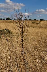 Pale Eoliche nella campagna nei dintorni di Minervino Murge (non inquadrate) immerse nella vegetazione locale. Nella foto .