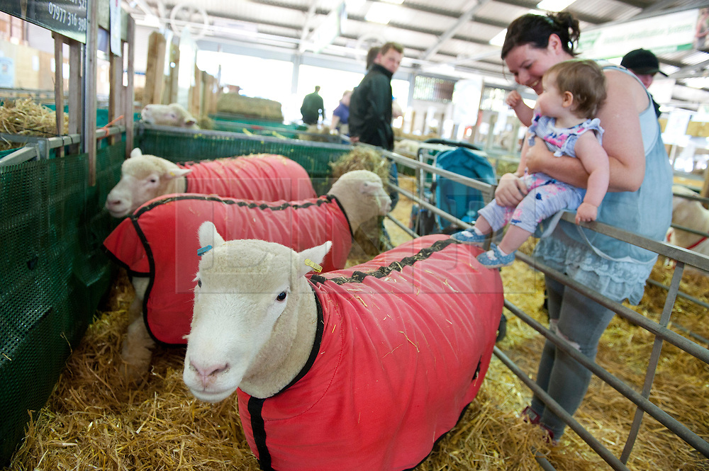 © Licensed to London News Pictures. 23/07/2017. Llanelwedd, UK. A young child is shown sheep on the eve of the Royal Welsh Show. The Royal Welsh Agricultural Show is hailed as the largest & most prestigious event of its kind in Europe. In excess of 200,000 visitors are expected this week over the four day show period. The first ever show was at Aberystwyth in 1904 and attracted 442 livestock entries. Photo credit: Graham M. Lawrence/LNP
