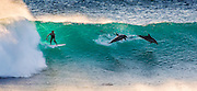 Surfer goes to head-to-head with pod of dolphins as he takes on gigantic Australian waves… and loses<br /> <br /> When surfer Trent Sherbourne zipped up his wetsuit, grabbed his board and headed down to the secluded beach he was probably hoping to have the waves to himself.<br /> So imagine his surprise when he found himself sharing the surf with a pod of dolphins who jumped out of the water right in front of him.<br /> But even more incredible is that the moment was captured back on land by a self-taught photographer who was lining up his last shot of the day while experimenting with a new lens.<br /> <br /> <br /> Matt Hutton, 31, had been taking pictures of Trent when the local surfer was completely upstaged by dolphin racing him down the wave, before losing out to the speedy sea-mammal.<br /> Amateur snapper Matt was travelling from Perth to his home in Wickham, Western Australia, in order to add pictures to his portfolio when he decided to stop in the small town of Kalbarri.<br /> After asking locals for information he was told of a few good spots to go and take pictures of surfers but was advised that dolphin sightings were rare.<br /> <br /> When he arrived at the beauty spot he found the rumours to be true as a few other photographers lined the shore training their hi-tech lenses on the ocean.<br /> Luckily for Matt, he had bought a specialist lens of his own just a few days before and was determined to get some good shots.<br /> He said: 'One photographer said that he had been there hundreds of times but only seen dolphins on a few occasions.<br /> 'I was getting some great photos of Trent Sherborne surfing this awesome wave, when a pod of dolphins decided to join him.<br /> 'On the first occasion I captured two dolphins sharing a wave with him and a few separate photos of just the dolphins by themselves.<br /> But when Matt came to line up his last picture a dolphin leaped from the wave just in front of Trent, and after zooming in on his camera's LCD scree