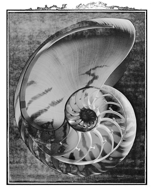 Solaroid - Shells - Nautilus 2 - This is a solarised polaroid photo art print by Paul Williams who invented the technique and is the only photographer to have used it. The process is sadly no longer possible. Taken in 1989, .<br /> <br /> Visit our FINE ART PHOTO  PRINT COLLECTIONS for more wall art photos to browse https://funkystock.photoshelter.com/gallery-collection/Fine-Art-Photo-Prints-by-Photographer-Paul-Williams/C0000UM829OLMVv8 .