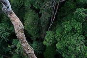 Parauapebas_PA, Brasil...Floresta Nacional de Carajas, Para...Carajas National Forest, Para...Foto: JOAO MARCOS ROSA / NITRO