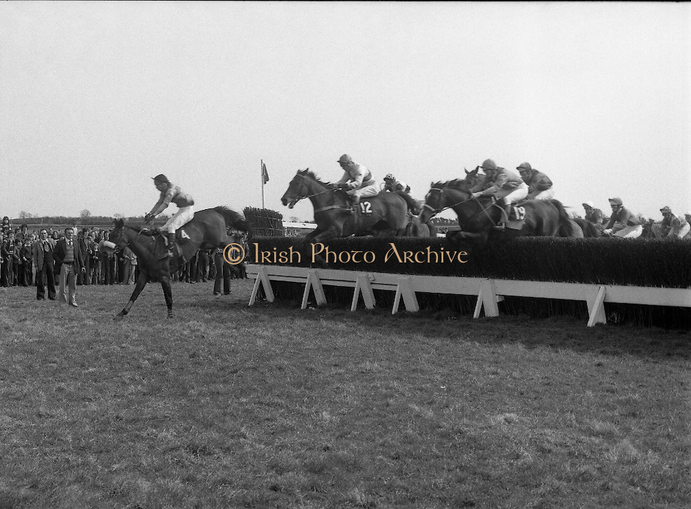"""Irish Distillers Grand National at Fairyhouse.  (M66)..1979..16.04.1979..04.16.1979..16th April 1979..The Irish Distillers Grand National was run today at Fairyhouse Racecourse, Co Meath.The race over 3.5miles is valued at £20,000. the winning trainer will also receive the Tom Dreaper,Perpetual Trophy which will be presented by Mrs Betty Dreaper..Image shows """"Credit Card """"leading no12 """"Delmoss"""" and no19 """"Smiling Jim, clearing a hurdle during the race."""