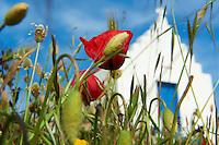 Grece, les Cyclades, Iles Egéennes, Ile de Mykonos, Chapelle dans les environs de Chora // Greece, Cyclades, Mykonos island, chapel near the Chora