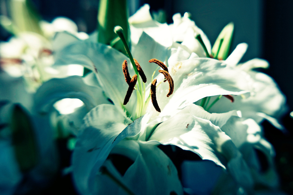 Lensbaby lillies