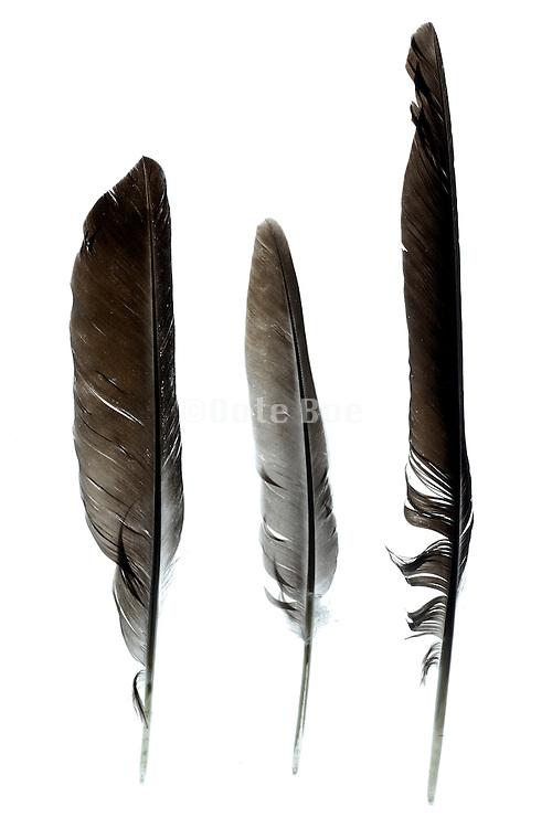 three different bird feathers