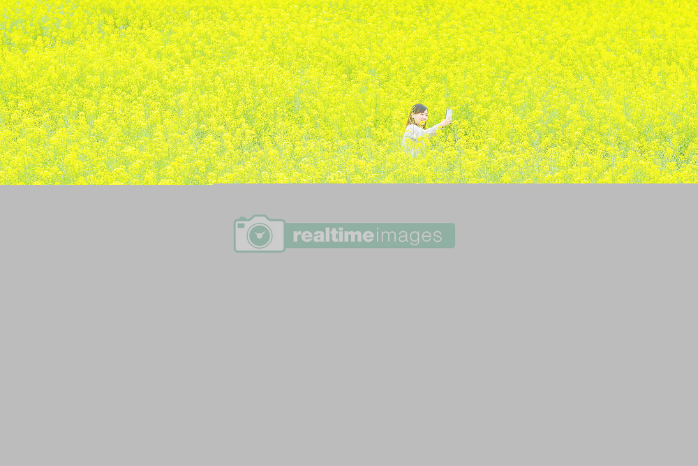 April 25, 2018 - Jiaxing, China - A young woman takes a selfie as she walks through cole flowers blossoms at Wuzhen Ancient Town in Jiaxing, east China's Zhejiang Province. (Credit Image: © SIPA Asia via ZUMA Wire)